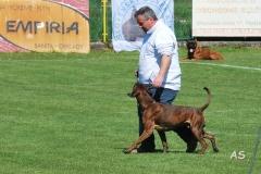 Faxe als Partner-Hund auf der WM 2016